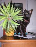 Pineapple_200509